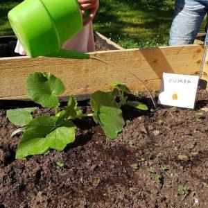 kunskap - här lär sig barnen odla